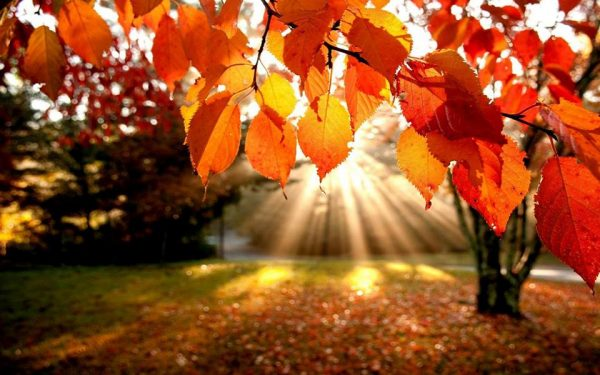Beautiful picture of fall foliage on a sunny day.