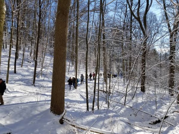 Hikers walking in line on a snowy wooded trail.